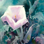 """Datura"" Watercolor on Montval ""8 x 10"""
